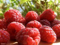 I Love Raspberry Ketones #RaspberryKetones #WeightLossSupplements #raspberryketone #pureraspberryketone Raspberry Plants, Raspberry Fruit, Raspberry Ketones, Raspberry Sangria, Strawberry Farm, Raspberry Recipes, Fruit Rose, Red Fruit, Fruit Bushes