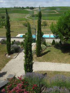 The way to go to the #pool in the heart of the #vineyards of #Grande #champagne - #Cognac