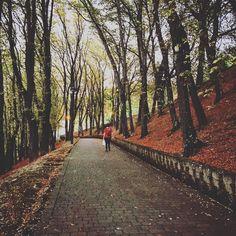 Llegó el otoño // Autumn is here. #instagramers #instagram #autumn #sunday #weekend #walk #tree #trees #leaves #road #way #walk #nice #amazing #love #life #lifestyle #evening #sundaywalk #woods #instacool #instagood #instalife #instadaily