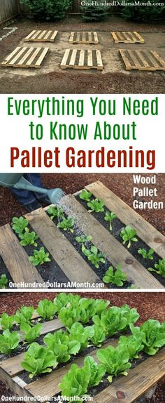 Square Garden Design Everything You Need to Know About Pallet Gardening - One Hundred Dollars a Month.Square Garden Design Everything You Need to Know About Pallet Gardening - One Hundred Dollars a Month Gardening For Beginners, Gardening Tips, Pallet Gardening, Flower Gardening, Gardening Zones, Pallet Allotment Ideas, Gardening With Kids, Gardening Scissors, Companion Gardening