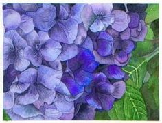 Susie's Watercolor TIps - Painting Hydrangeas