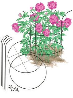 Peony Supports - Adjustable Grow-Through Plant Supports