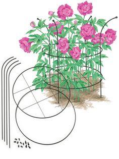 Peony Bush, Peony Care, Growing Peonies Adjustable Grow-Through Supports, Set of Grow-Through Supports, Set of 2 Peony Care, Hydrangea Care, Peony Support, Garden Plant Supports, Peony Bush, Growing Peonies, Peonies Garden, Garden Trellis, Garden Care