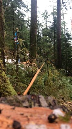 Epic Gif, Lumberjack Style, Logging Equipment, Forest Pictures, Growing Tree, West Coast, World, Life, Wood