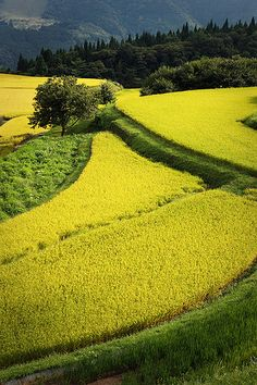 "Such as rice fields patchwork, Rice terraces in ""Bekku"", Hyogo Japan 