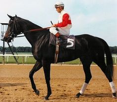 Ruffian at Belmont Park