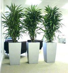 Best Low Light Office Plants Indoor Awesome Plant For That