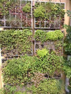 Grøn væg