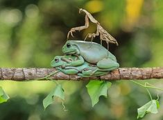 Frog-photography - fotógrafo indonésio Both Yensen