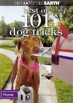 Best of 101 Dog Tricks « dogsiteworld.com