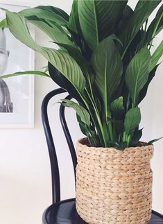 Try these 5 indoor plants! Try these 5 indoor plants! Try these 5 indoor plants! Indoor Plant Pots, Best Indoor Plants, Outdoor Plants, Potted Plants, Indoor Gardening, Plantas Indoor, Decoration Plante, Bedroom Plants, Interior Plants