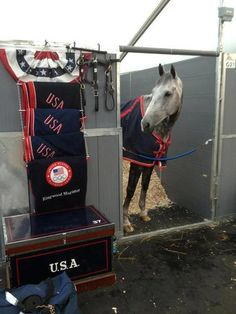A behind the scenes photo of Team USA stabling. Tiana Courdray's Rigwood Magister pokes his head out into the aisle. It's funny to think...for the horses, the grooms, even the riders... this is really just another show. Everything else, the equipment, stabling, it's just like the other shows we go to.