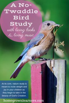 A No-Twaddle Bird Study with Living Books and Living Music —.- A No-Twaddle Bird Study with Living Books and Living Music — Homegrown Learners Twaddle-Free Bird Study Guide with Living Books and Music - Nature Activities, Science Resources, Science Activities, Teaching Music, Teaching Science, Homeschool Curriculum, Homeschooling, Bird Book, Nature Study