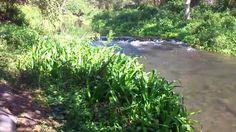 Rios para visitar en colima, Peñitas En colima exiten una gran cantidad de rios para visitar y bañarse. Este es uno de los ríos con los que cuenta Colima. El balneario se llama Peñitas y se encuentra en el municipio de Coquimatlán. Se caracteriza por llevar agua todo el año.