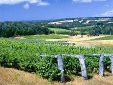 Margaret River Wineries, Oz
