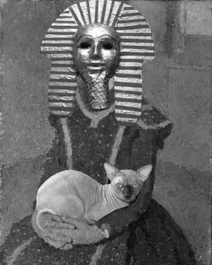 Edmond Simpson Sphinx Cat (04-18) Sphinx Cat, Collage, Cats, Fictional Characters, Gatos, Sphynx Cat, Collage Art, Kitty, Collages
