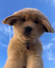 Like puppies, bunnies, babies, and so on. A place for really cute pictures and videos! Super Cute Puppies, Cute Baby Dogs, Cute Little Puppies, Cute Dogs And Puppies, Cute Little Animals, Cute Funny Animals, Doggies, Baby Animals Pictures, Cute Animal Pictures