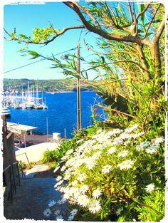 Horta bay from Porto Pim village, Faial - http://www.traveldifferent.eu/home-eng/azores/faial/ #traveldifferent #faial #horta #azores #summer #boats #sea #ocean #flowers