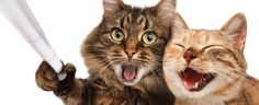 Like These Right Meow: The Top 10 Cats of Instagram