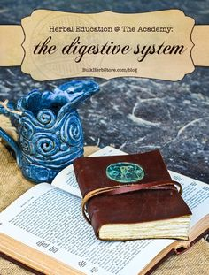 """The Digestive System health with herbs + a bitters recipe /  """"All disease begins in the gut"""""""