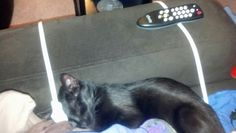 JuJu again on the heating pads