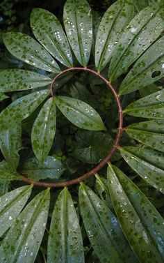 green power – Greenest Way Sombra Neon, Spirals In Nature, Foliage Plants, Patterns In Nature, Natural World, Green And Brown, Shades Of Green, Mother Nature, Planting Flowers