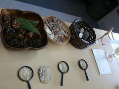 natural materials displayed to invite exploration and spark inquiry about nature