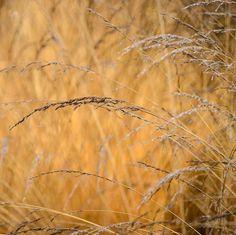 September Song, Make Way, Ornamental Grasses, Early Spring, Backyard Landscaping, Perennials, Wild Flowers, Autumn, Bbc