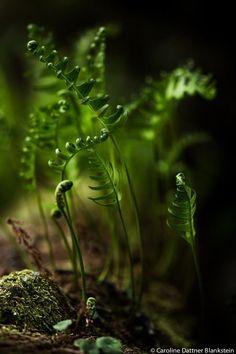Wald carolinedattnerblankstein: Dancing in the dark… / Danser dans la nuit… South Corsica © Paradise Mystical Forest, Dancing In The Dark, Magic Forest, Dark Forest, Foto Art, Walk In The Woods, Plantation, Macro Photography, Belle Photo