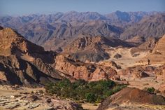 Lonely Green Oasis, Taba, Egypt / by Ahmed Yousry en 500px