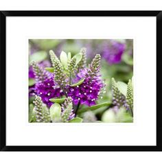 Global Gallery Hebe Dona Diana Variety Flowers by Visions Pictures Framed Photographic Print Size: