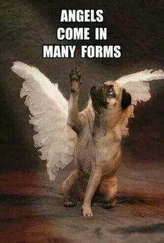 #angelpuppies