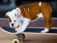 Skaters | BaggyBulldogs