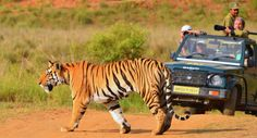 "Book with Cruise Planners at http://www.gobooktrips.com #Flying #Safari - #Tigers & #Rhinos #India & #Nepal 12 Days USD 9,995 per personSaturday 25 March to Wednesday 05 April 2017 *Limited seats only Maximum #Game Drives - Minimum Bumpy Road Journey Stays in Award Winning boutique Lodges Flying Safari - Tigers & Rhinos takes us on a wild journey through jungles of central India which was Rudyard Kipling's source of inspiration for his ""Jungle Book"". We visit both Kanha and Bandhavgarh…"