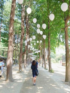 A day trip to Nami Island in Gapyeong, South Korea