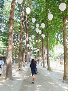 A day trip to Nami Island in Gapyeong, South Korea