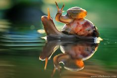 baby snail | Tumblr