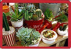 Crazy About Enamel Ware!  Cactus and Succulent Design
