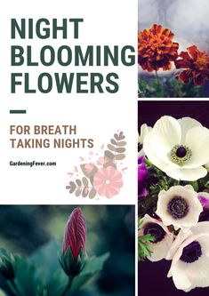 Night blooming flowers are the most fragrant and aesthetically pleasing flowers in our garden. Night blooming flowers moon garden and … Night Blooming Flowers, Night Flowers, Spring Flowers, Fresh Flowers, Witchy Garden, Gothic Garden, Gardening For Beginners, Gardening Tips, Vegetable Gardening