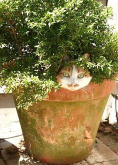 Funny Cat In Flower Pot