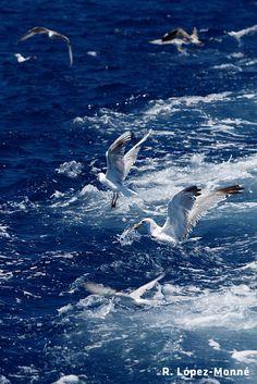 Mar y gaviotas en Cambrils