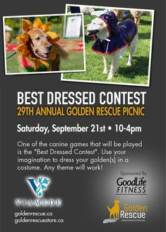 Save the date and get ready to load up the car and your Goldens for an action-packed day at the majestic Viamede Resort ~ nature's paradise in the Kawarthas. Golden Events, Silent Auction, 2021 Calendar, Rainbow Bridge, Imagination, Life Is Good, Nice Dresses, Picnic, Costume
