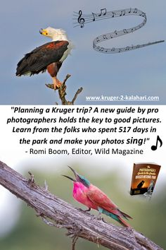 Bird Interactions in the Kruger Park - capturing birds interacting can be a challenge. Here we provide some of our best bird images with a few photo tips. Kruger National Park, National Parks, Common Starling, River Lodge, Best Positions, Make Photo, Self Driving, Africa Travel, Travel Photographer