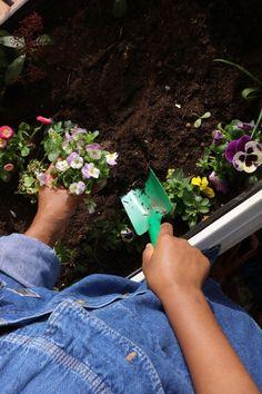 Plantation de fleurs dans un bac potager de balcon en permaculture. Plantation, Permaculture, Flowers