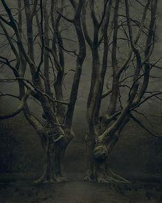 twin tree gate