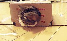 Cat #GIF