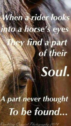 Horse Inspiration Horse Eye Horse Soul HorseWasMyFirstWord.com