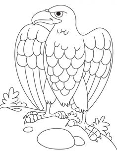Bald eagle coloring page | Download Free Bald eagle coloring page for kids | Best Coloring Pages