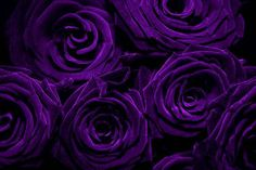 apparently, purple roses indicate love at first sight.