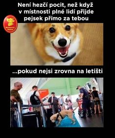 Humor, Corgi, Nice Things, Memes, Sarcasm, Corgis, Humour, Meme, Funny Photos